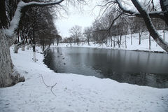 Winter Park duck pond. Ducks and drakes swim in cold water in winter in a park Stock Photos