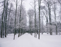 Winter park in the evening Royalty Free Stock Image