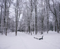 Winter park in the evening Stock Photography