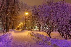 Winter park in the evening covered with snow Stock Images