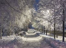 Winter park in the evening covered with snow Royalty Free Stock Photography