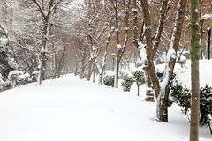 Winter and Park Royalty Free Stock Photo
