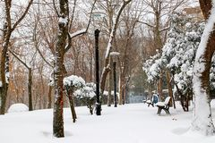 Winter and Park Stock Photography