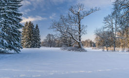 Winter park Stock Images