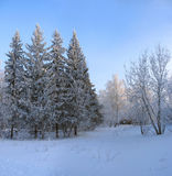 Winter park. Frosty trees against blue sky Royalty Free Stock Photo