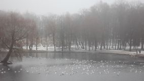Winter-Park Gatchina stock video