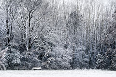 Winter in a park. Isolated benches Stock Photo
