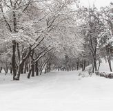 Winter in the park Kremenkug Royalty Free Stock Photography