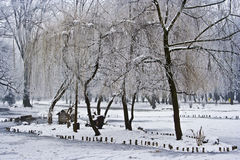 Winter park landscape. With bare trees and frozen plants Stock Image
