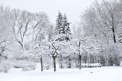 Winter park landscape Royalty Free Stock Photos