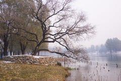Winter Park landscape, Royalty Free Stock Photography