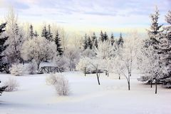 Winter park landscape with frosty trees Royalty Free Stock Images