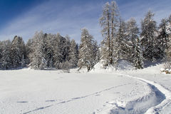 Winter park. Winter landscape in the snow Royalty Free Stock Image