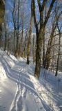 Winter park. Winter landscape in the park. Snow-covered footpath in the park, footprints in the snow. Sunny frosty day. Blue sky through the branches of trees Stock Images