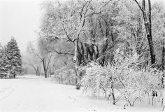 Winter park lane Royalty Free Stock Photography