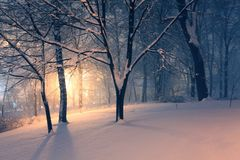 Winter park and light behind the trees Royalty Free Stock Photography