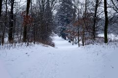 Winter in the Park Royalty Free Stock Photo
