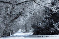 Winter-Park mit gefrorenen Eisniederlassungen Stockfotos