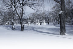 Winter park in the morning Royalty Free Stock Photo