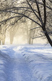 Winter park. In the morning mist Royalty Free Stock Image
