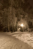 Winter park at night. Winter park in snow at night Stock Image