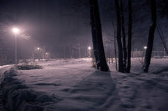 Winter park at night. Royalty Free Stock Images