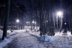Winter park at night. Frosty winter in dark park Stock Image