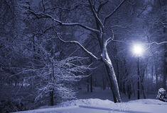 Winter park at night Royalty Free Stock Photography