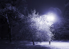 Winter park at night stock image