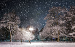 Winter park at night Royalty Free Stock Images