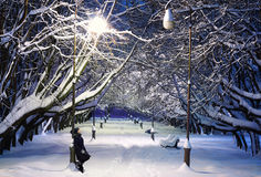 Winter Park at Night Royalty Free Stock Photo