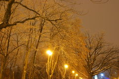 Winter Park, night lighting, lights shining, the snow on the branches, the magic of the winter, a winter garden Stock Photo