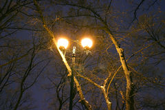 Winter Park, night lighting, lights shining, the snow on the branches, the magic of the winter, a winter garden Royalty Free Stock Photos