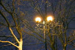 Winter Park, night lighting, lights shining, the snow on the branches, the magic of the winter, a winter garden Stock Image