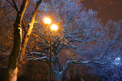 Winter Park, night lighting, lights shining, the snow on the branches, the magic of the winter, a winter garden Royalty Free Stock Photo