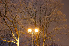 Winter Park, night lighting, lights shining, the snow on the branches, the magic of the winter, a winter garden Royalty Free Stock Images