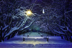 Winter park night scene royalty free stock photo