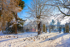 Winter park in Oliwa. Entrance gates in winter to the city park in Oliwa, Poland Stock Image