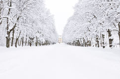 Winter park, Pavlovsk, Saint-Petersburg, Russia Stock Image