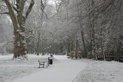 Winter in the park. Royalty Free Stock Photography