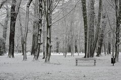 Winter in the park. Stock Image