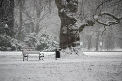 Winter in the park. Stock Images