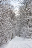 Winter park road Stock Photo