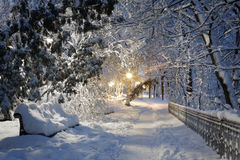 Winter in the park Stock Image