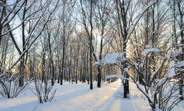 A winter park scene. Stock Photo