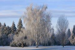 Winter park scene. Natural winter scene in park with trees stock image