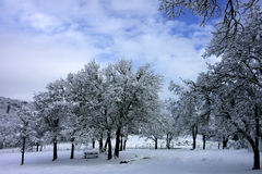 Winter Park Scene. Snow Covered Trees Winter Park Scene Royalty Free Stock Photos