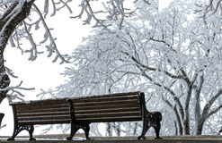 In Winter Park. Stock Images