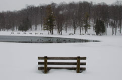 Winter Park Scene. A winter park scene with Canadian geese in a frozen pond and snow covered trees in the background Stock Photography