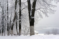 Winter park, scenery. Winter  park, scenery with trees in sunny cold day Royalty Free Stock Photo